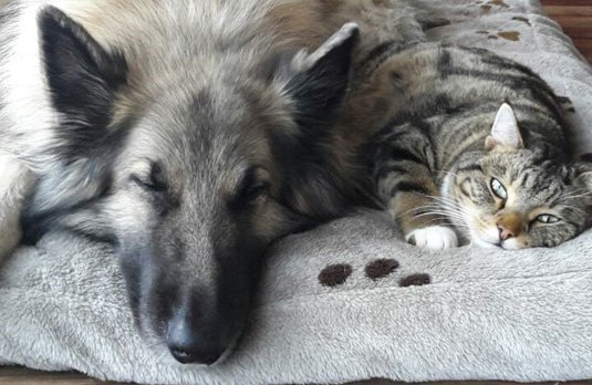 Tierhomöopathie für Hunde, Katzen, Pferde, Rinder